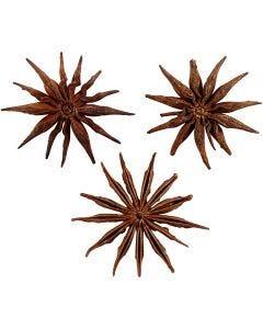 Semi di anice stellato, diam: 15-20 mm, 250 g/ 1 conf.