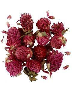 Fiori secchi, Trifoglio rosso, L: 1,5-2,5 cm, diam: 1 - 1,5 cm, viola, 1 conf.