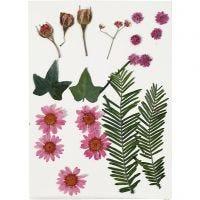 Fiori e foglie pressati, rosso chiaro, 19 asst./ 1 conf.