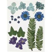 Fiori e foglie pressati, blu, 19 asst./ 1 conf.