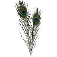 Piume di pavone, L: 25-30 cm, 10 pz/ 1 conf.