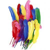 Piume, L: 20 cm, colori asst., 36 pz/ 1 conf.