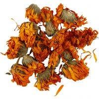 Fiori secchi, Calendula, diam: 1 - 1,5 cm, dorato, 1 conf.